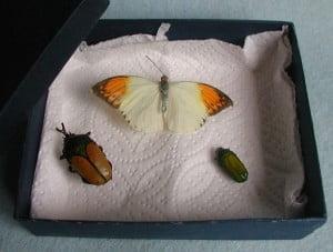 Het Vlinderparadijs