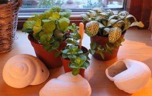schelpen en plantjes