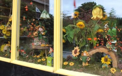 Zonnebloemen en Lampionplantjes in de etalage